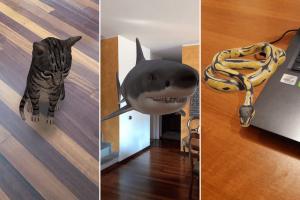 animali-3d-google